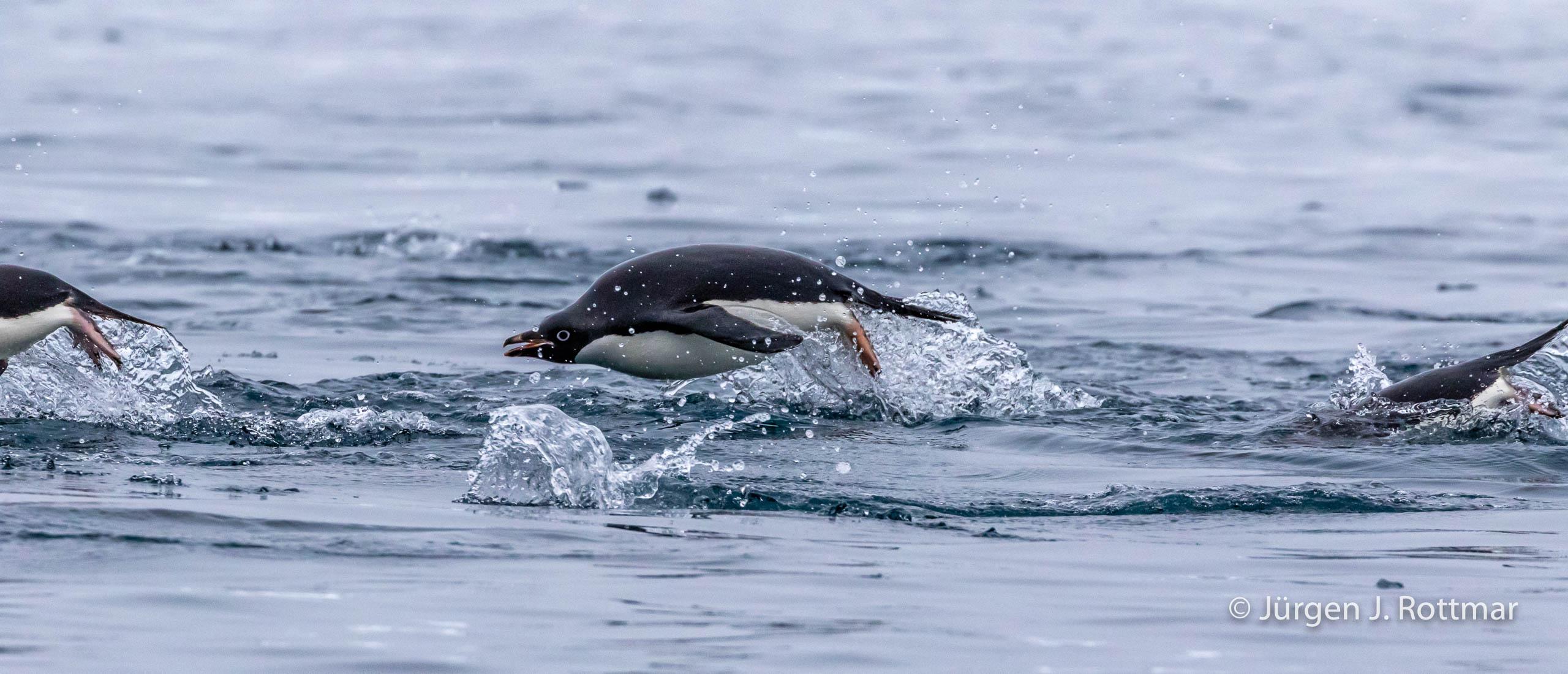 Juergen J Rottmar Antarctic Peninsula Gourdin Island R6A4682 Bearbeitet