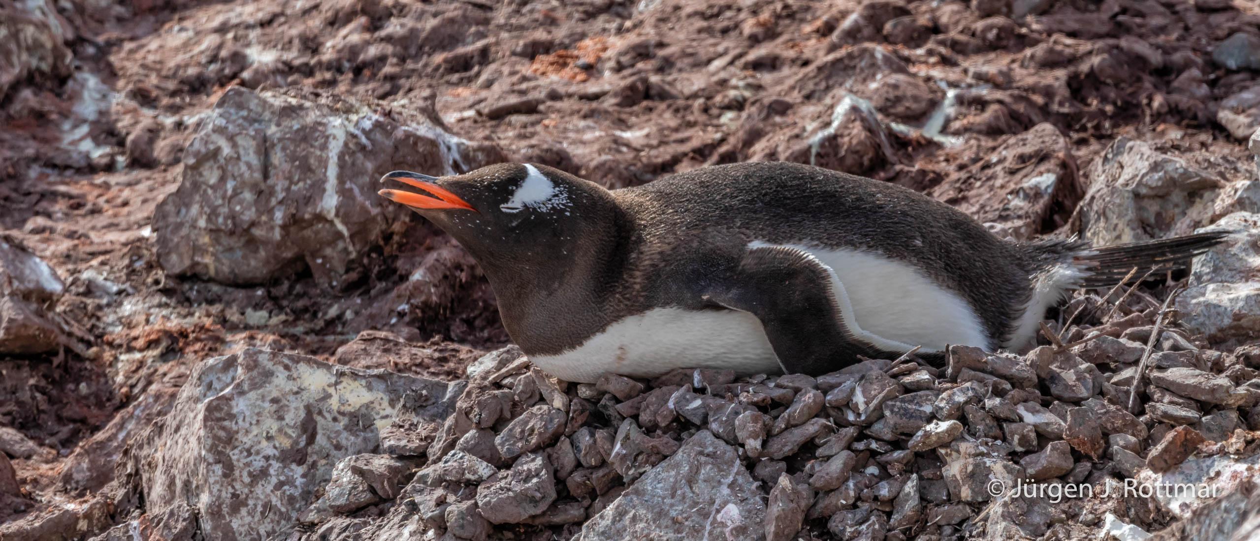 Juergen J Rottmar Antarctic Peninsula R6A0582 Bearbeitet
