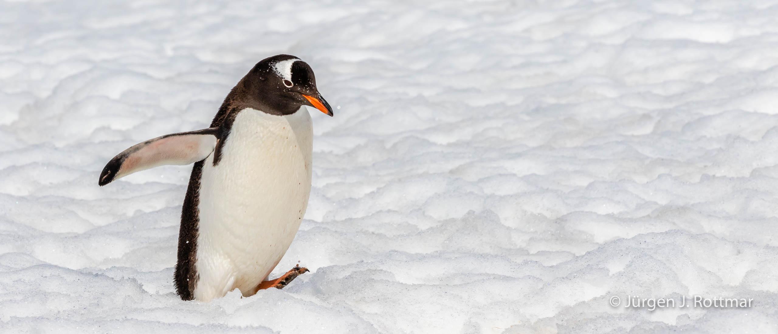 Juergen J Rottmar Antarctic Peninsula R6A0795 Bearbeitet