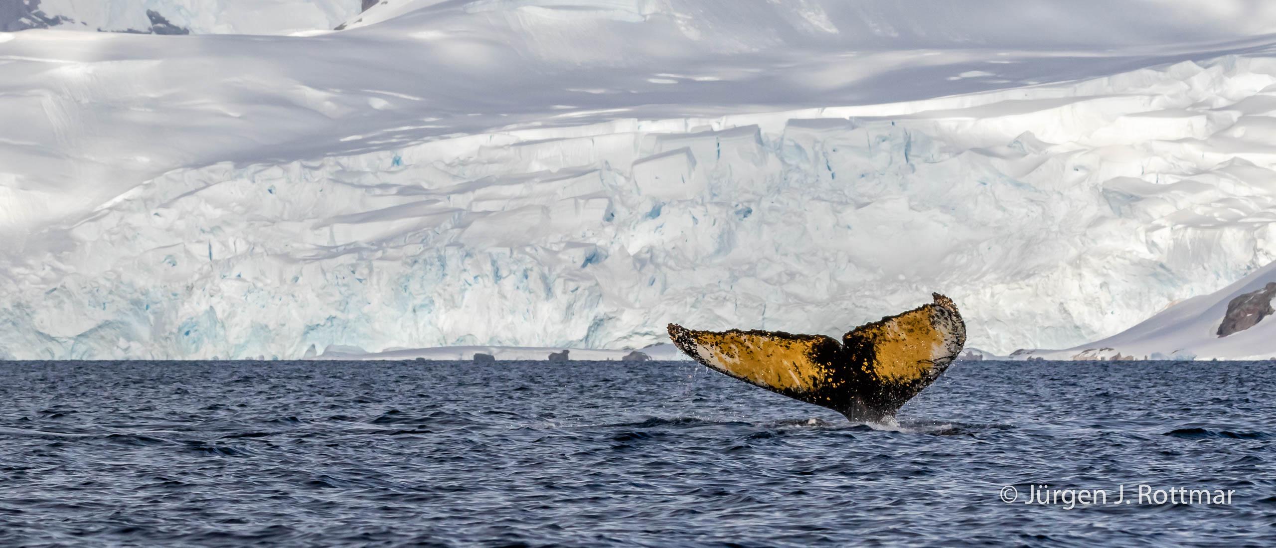 Juergen J Rottmar Antarctic Peninsula R6A2973 Bearbeitet