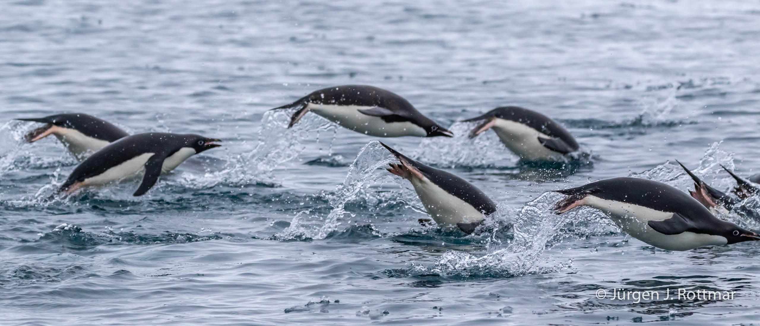 Juergen J Rottmar Antarctic Peninsula R6A4363